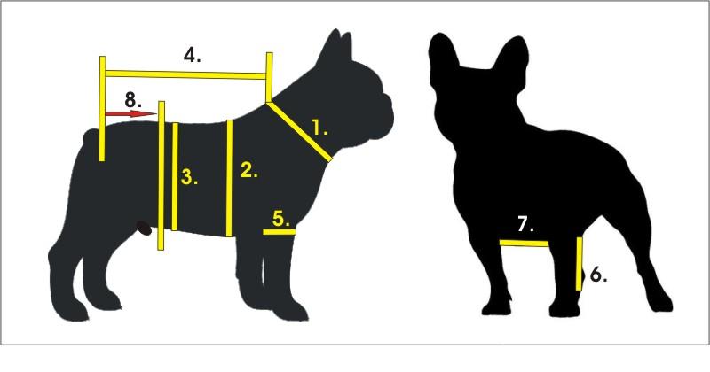 Francia bulldog méretvétel